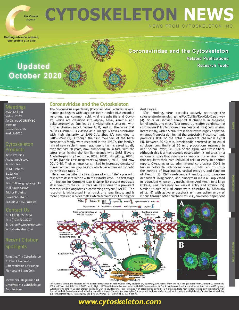 Coronavirus_and_the_cytoskeleton_v1.7_updated__Page_1