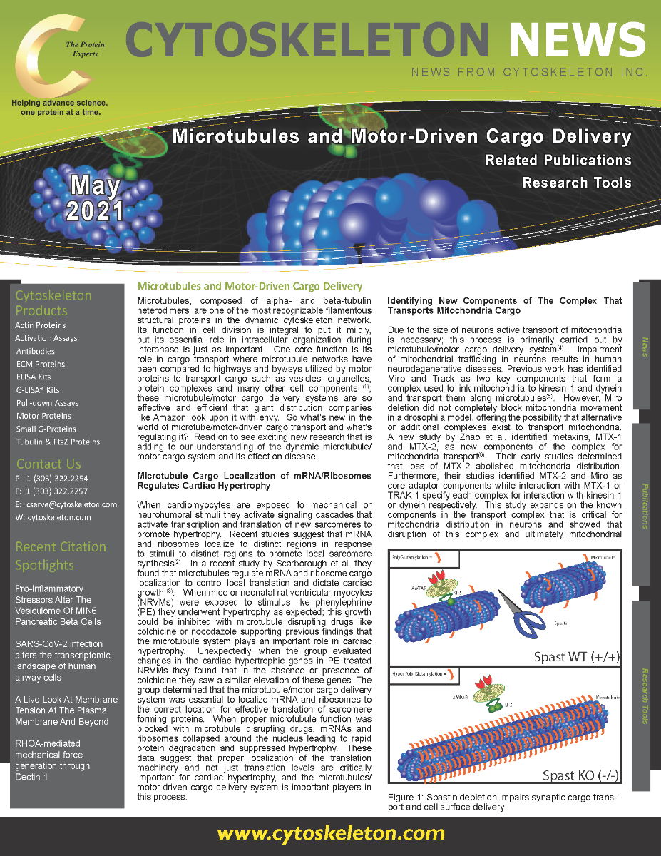 Microtubules_and_Motor-Driven_Cargo_Delivery_Page_1_1