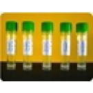 BimC kinesin motor domain protein: GST tagged: A. nidulans
