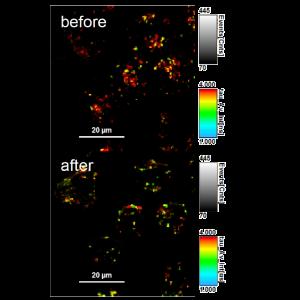 Lyso Flipper-TR Kit for fluorescence cell membrane microscopy
