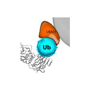 Ubiquitination Affinity Beads