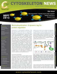 monoubiquitination and regulation newsletter