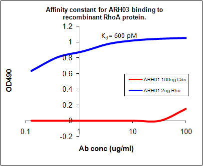 ARH03 Kd Measurement