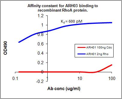 ARH03 Kd Measurement