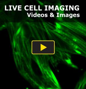 Video-Callout-Spiro-DY-edits_1