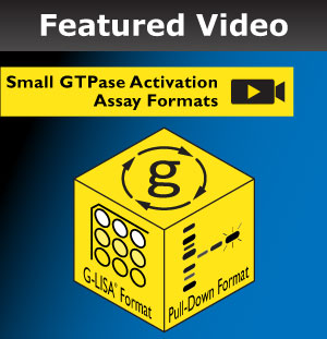 Small GTPase Activation Assays Video