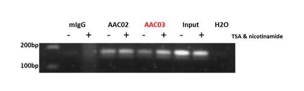 Acetyl Lysine ChIP