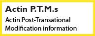 Actin PTM