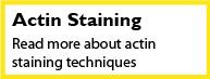 Actin Staining