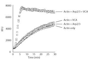arp-actin-pol