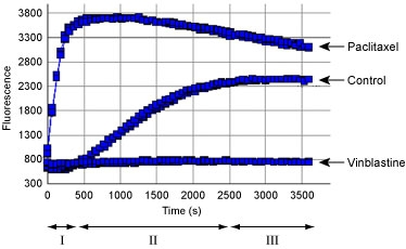 Figure 1. Tubulin polymerization using the fluorescence based tubulin polymerization assay (BK011P). Tubulin was incubated alone (Control), with Paclitaxel or Vinblastine. Each condition was tested in duplicate. Polymerization was measured by excitation at 360 nm and emission at 420 nm.  The three Phases of tubulin polymerization are marked for the control polymerization curve; I: nucleation, II: growth, III: steady state equillibrium.