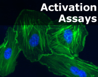 Activation Assays