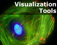 Actin Visualization