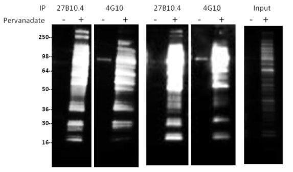 comparison-data-images-fig1
