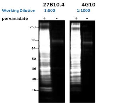 comparison-data-images-fig3
