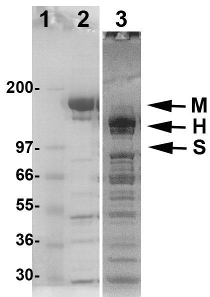 cs-mh03-Fig1