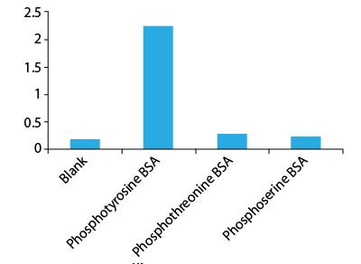 Western blot using APY03-HRP Antibody