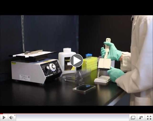 g-lisa-video-screenshot