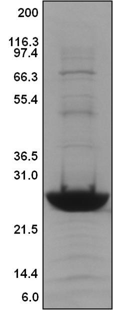 kras-protein-figure-1