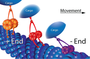 motor-diagram