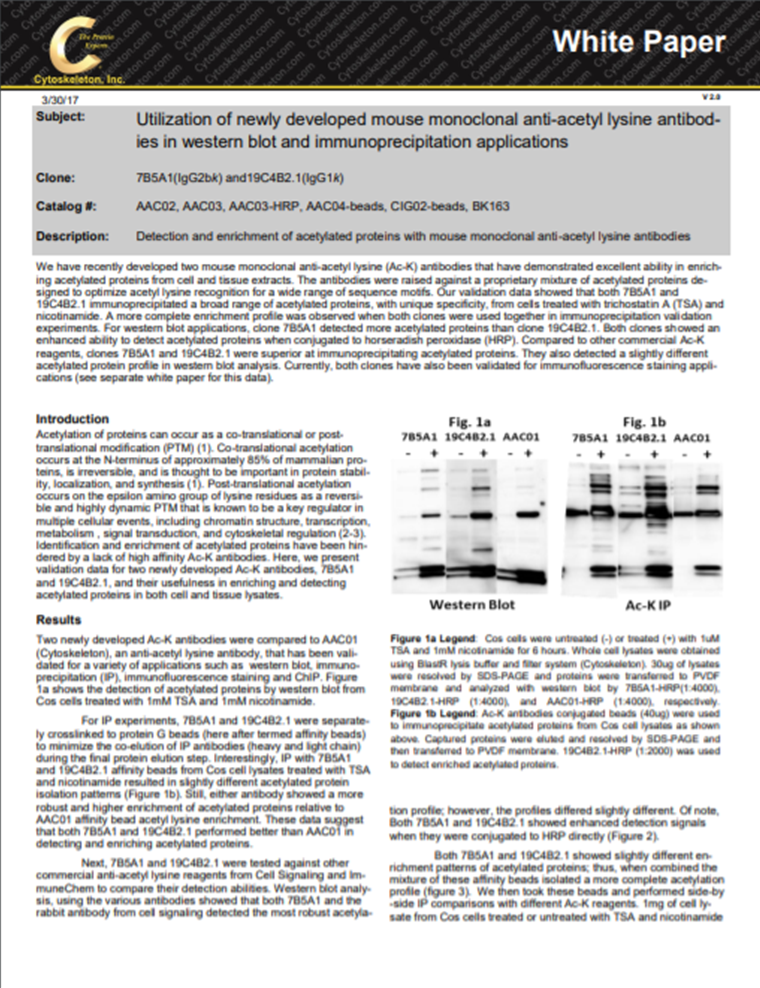 new_acetylation_antibodies_white_paper_cover_image