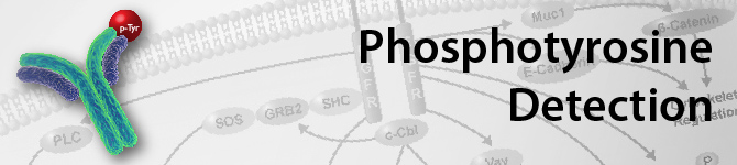 phosphotyrosine-detection-methods