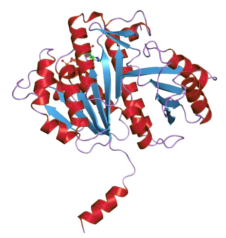 FtsZ Crystal Structure