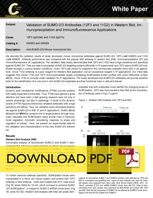 SUMO 2/3 Antibody Comparison PDF Download