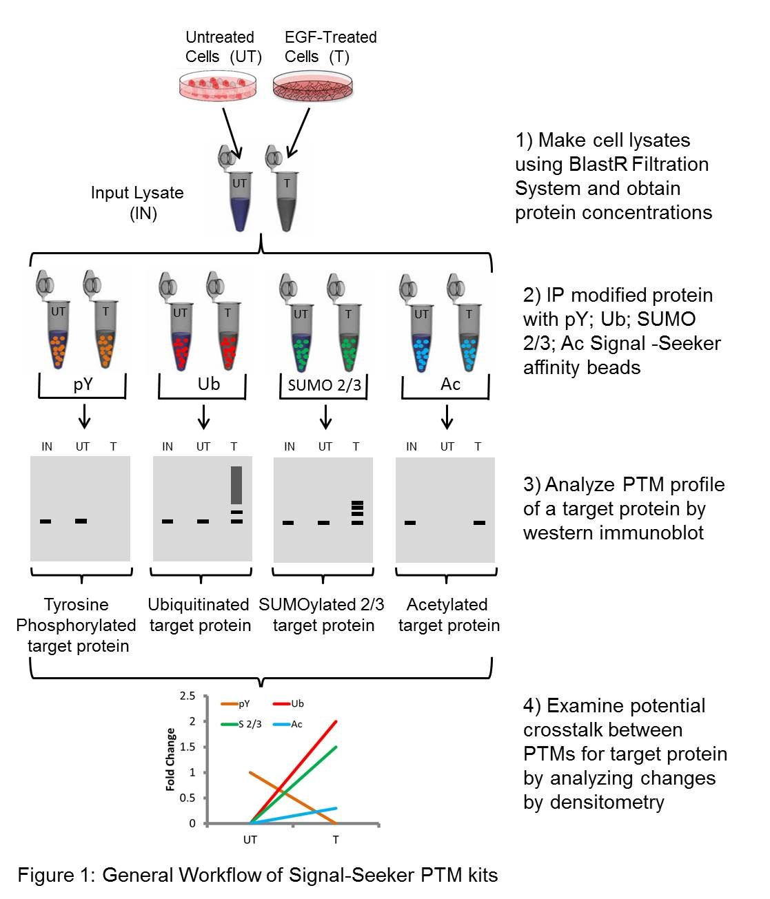 Signalling pathway